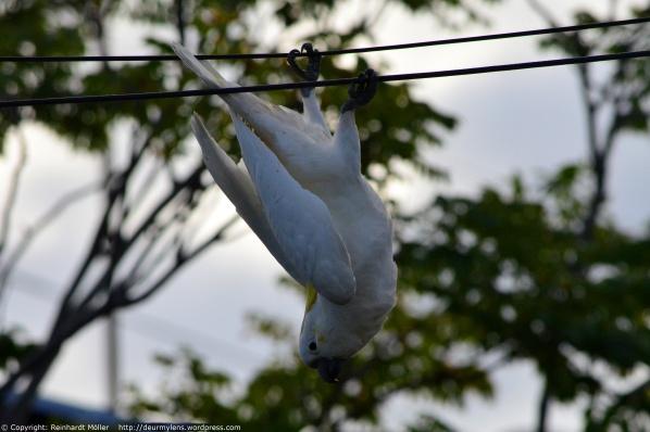 DSC_0281 Blog Just Hanging_2